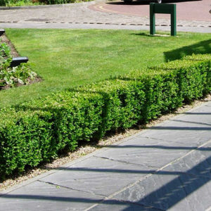 Lawn Mowing Services Burnside Heights